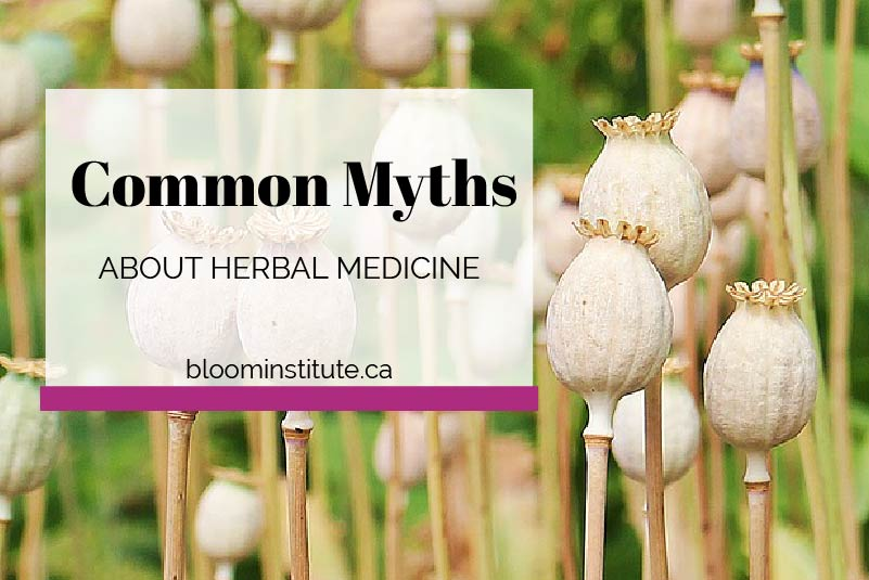 common myths about herbal medicine