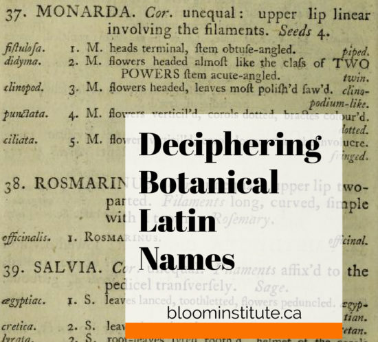 Deciphering Botanical Latin Names