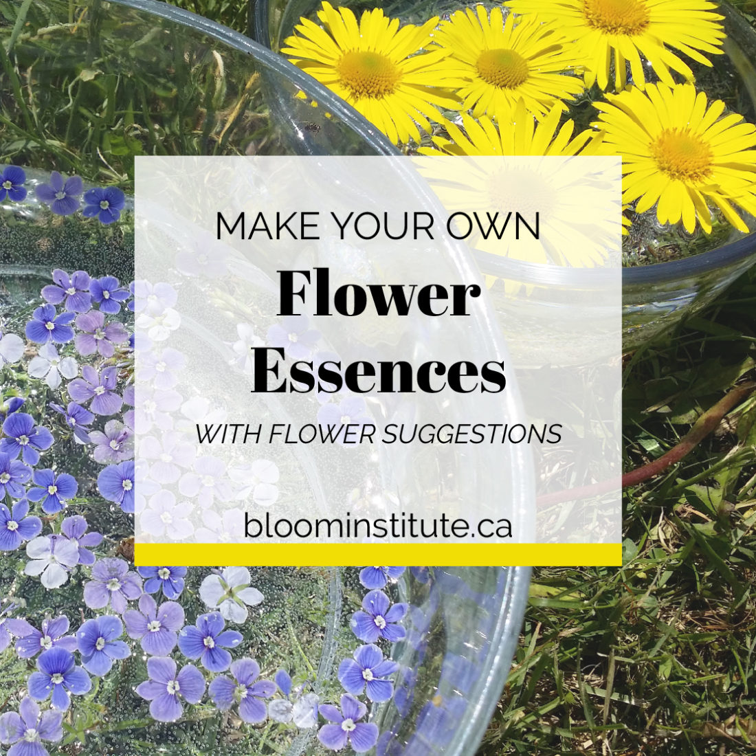 How To Make Your Own Flower Essences Bloom Institute