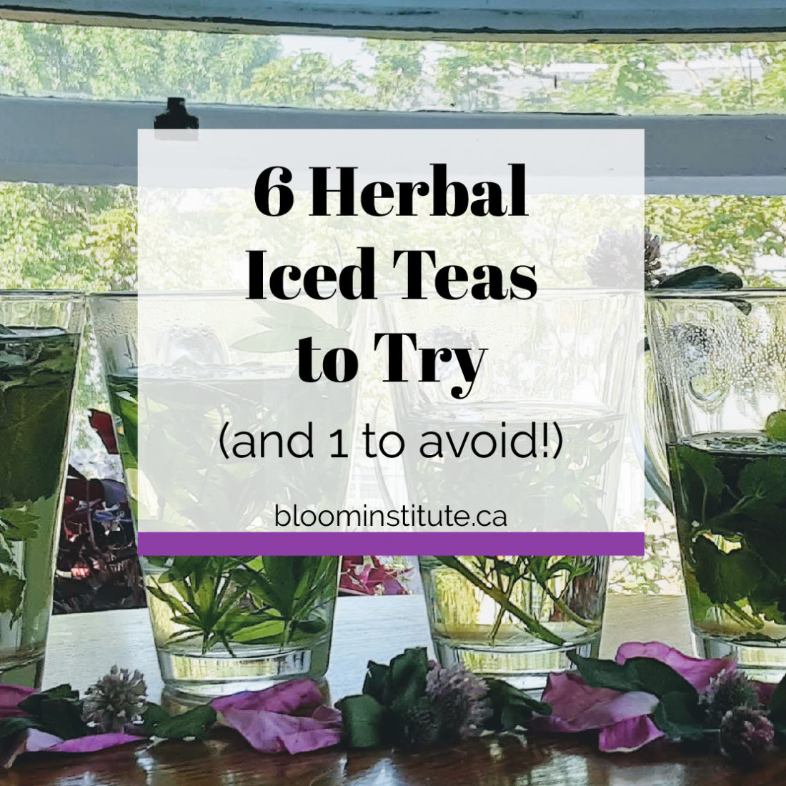 herbal iced teas to try