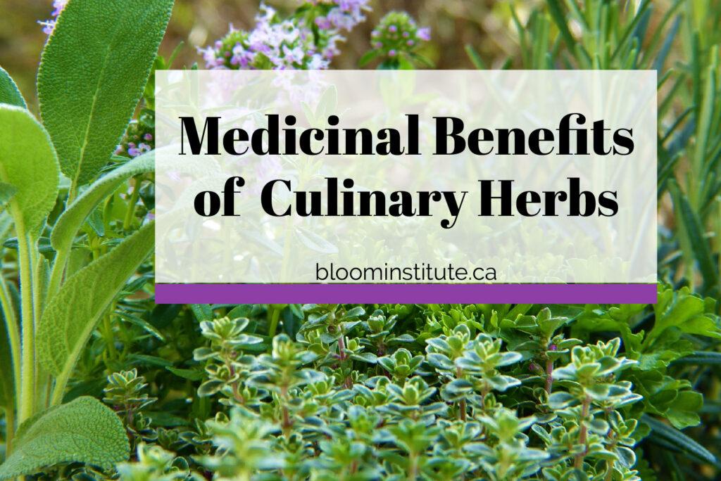 medicinal culinary herbs cover